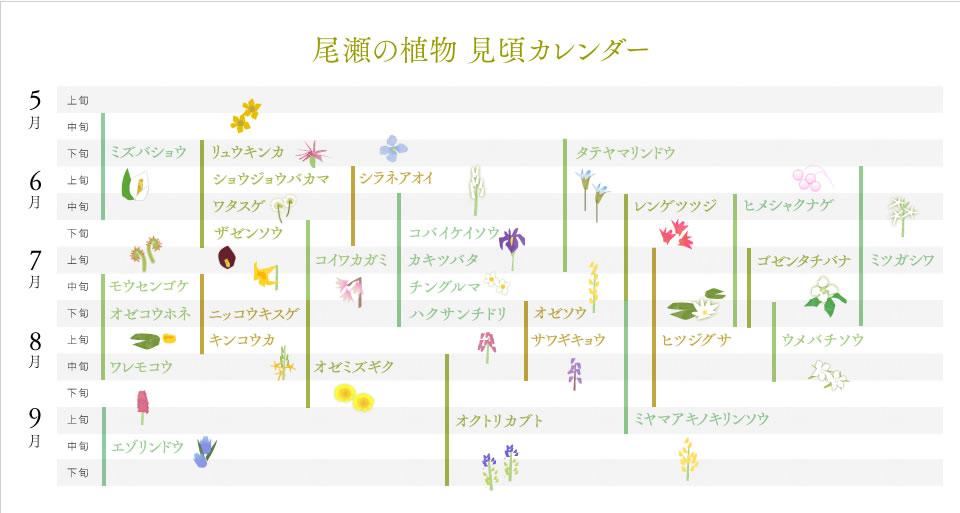 尾瀬の植物見頃カレンダー